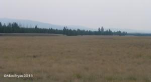 Big Prairie in Glacier National Park