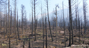 Fire impact to eastern central Glacier National Park- 2015