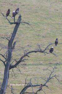 Bald Eagles in Highland County, Virginia