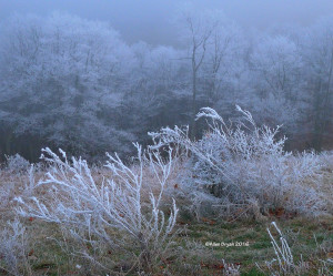 Freezing Fog on Bear Mountain, Virginia