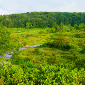 Dolly Sods scenic view